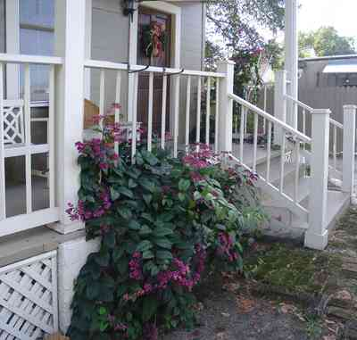 Pensacola:-Seville-Historic-District:-311-East-Intendencia-Street_03.jpg:  gulf coast cottage, flowering vine, trellis, porch, stucco