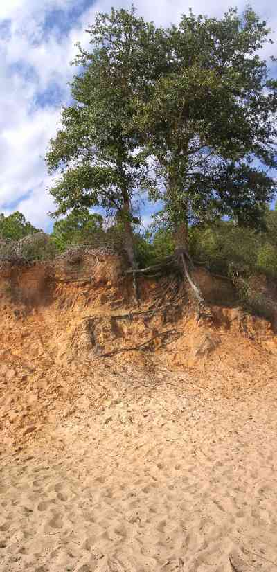 Scenic-Highway:-Bay-Bluffs-Park_05a.jpg:  bluffs, red clay, sand, pine trees, quartz sand, gulf of mexico, escambia bay,
