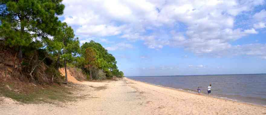Scenic-Highway:-Bay-Bluffs-Park_06.jpg:  gulf coast, escambia bay, bluff, pine trees, cirrus clouds, beach
